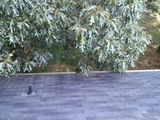 Alpharetta's Best Gutter Cleaners Before and After Tree Pruning