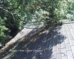 Alpharetta's Best Gutter Cleaners does tree pruning of limbs coming in range of the gutters.